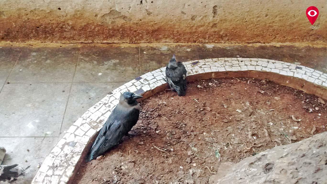 बढ़ती गर्मी से पशु-पक्षी भी परेशान