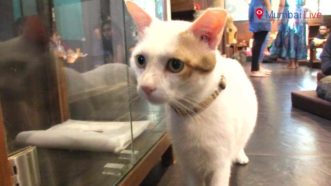 Celebrate 'International Cat day' with your feline friends at Versova's Cat Cafe