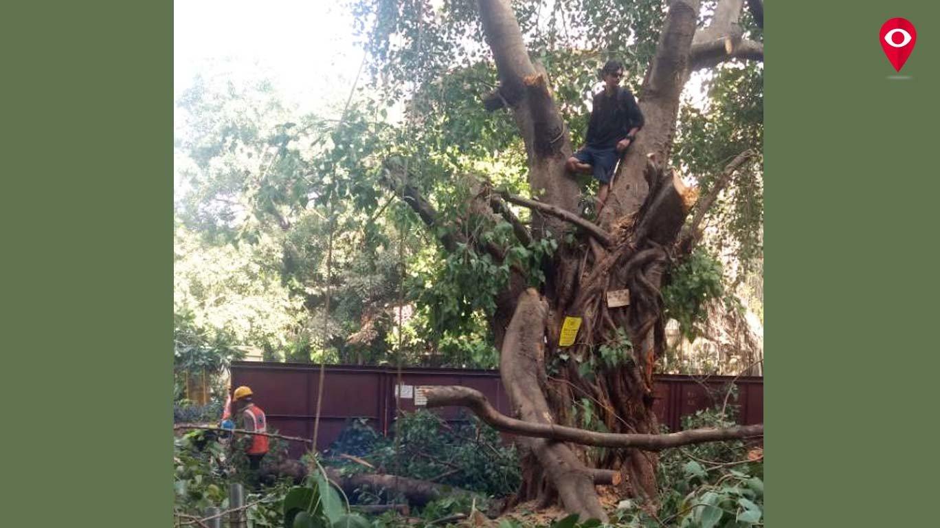 झाडं वाचवण्यासाठी 'सेव्ह ट्री'चे 'चिपको आंदोलन'