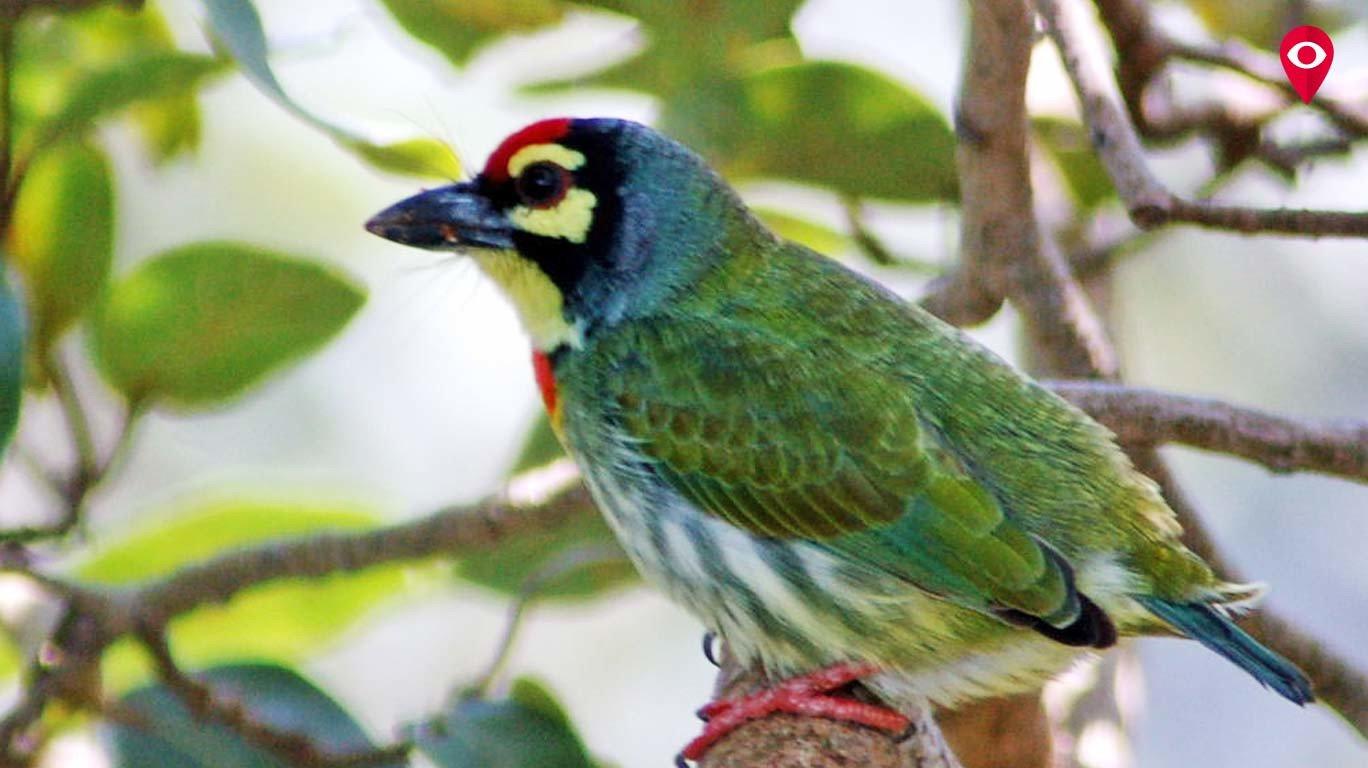 मुंबईचा अधिकृत पक्षी कोणता हे माहीत आहे का?