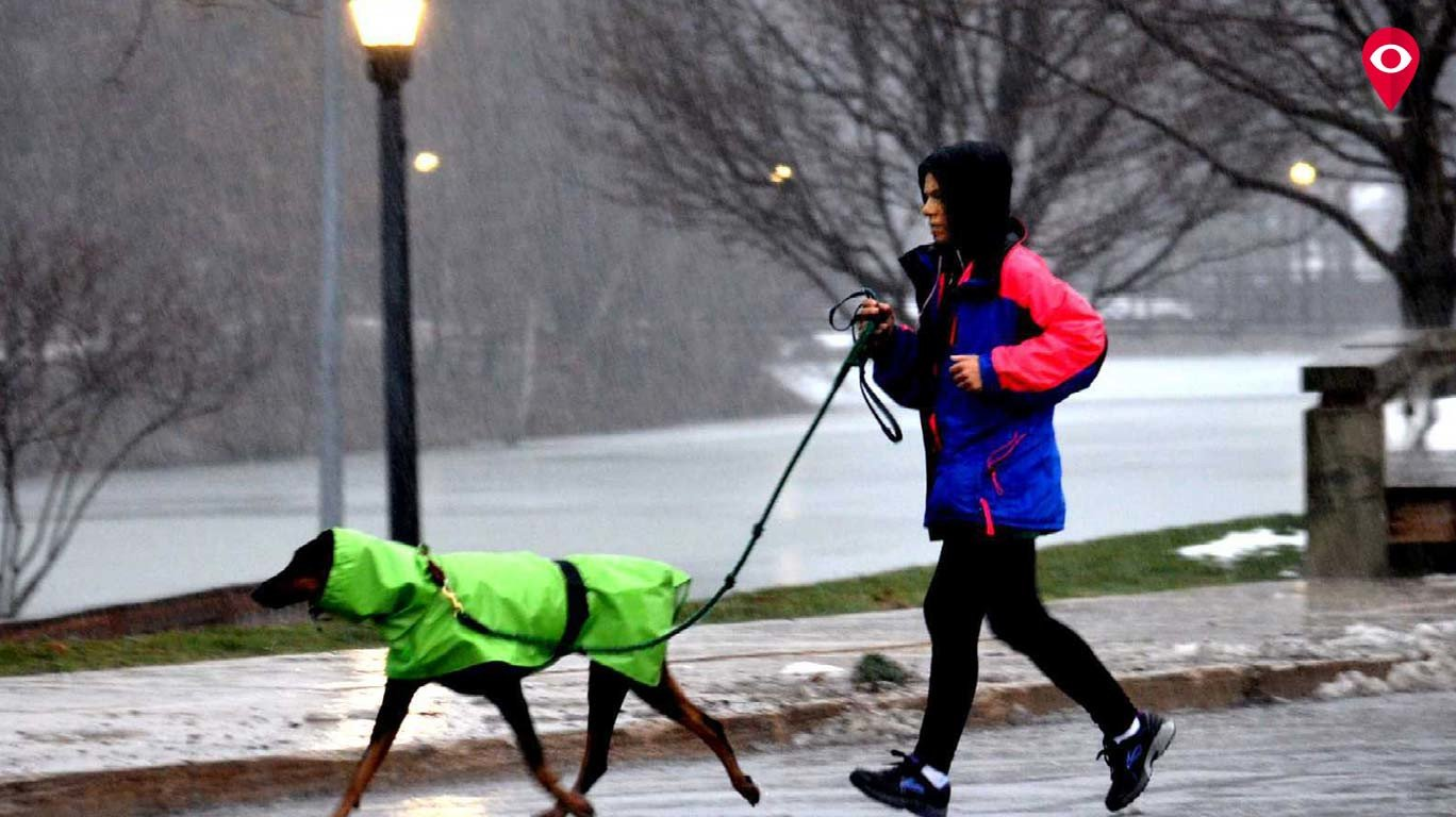 How to care for your canines this monsoon