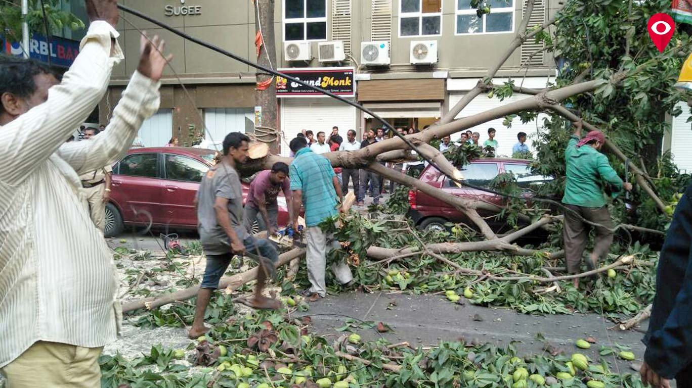 Tree collapses on cars in Prabhadevi