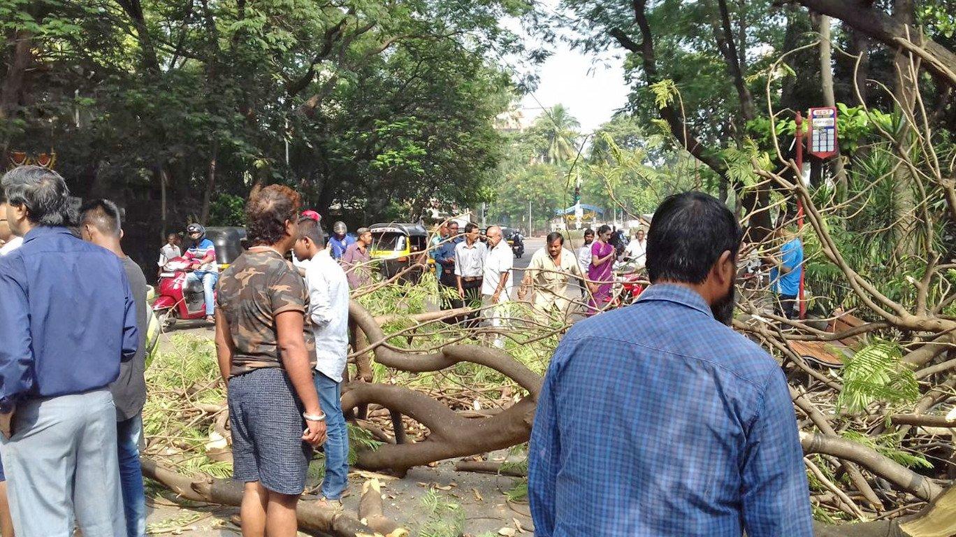 चेंबूरमध्ये झाड अंगावर पडून महिलेचा मृत्यू