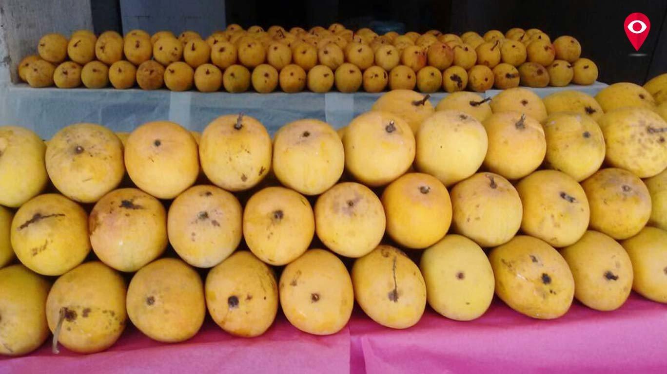 आंबे खाण्यावरून डॉक्टरांमध्येच जुंपली !
