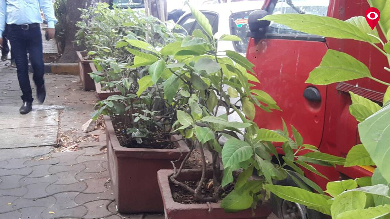 Maharshi Karve Road Resident Association's sincere efforts making the area lush green
