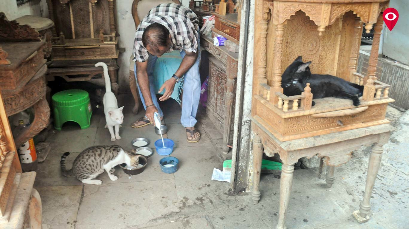 Meet Mahim's Jabbarbhai Billiwaale and his '25-cats family'