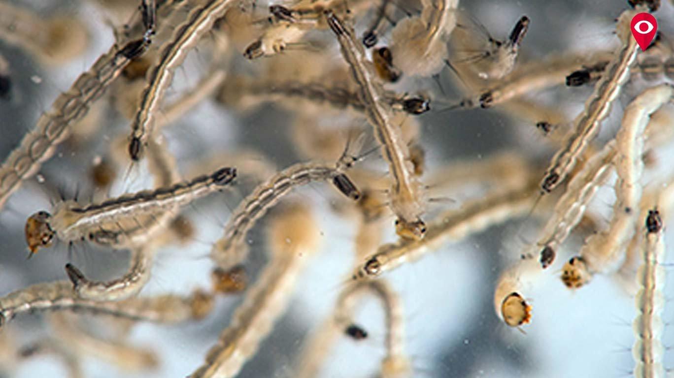 Zika virus warning for Mumbai