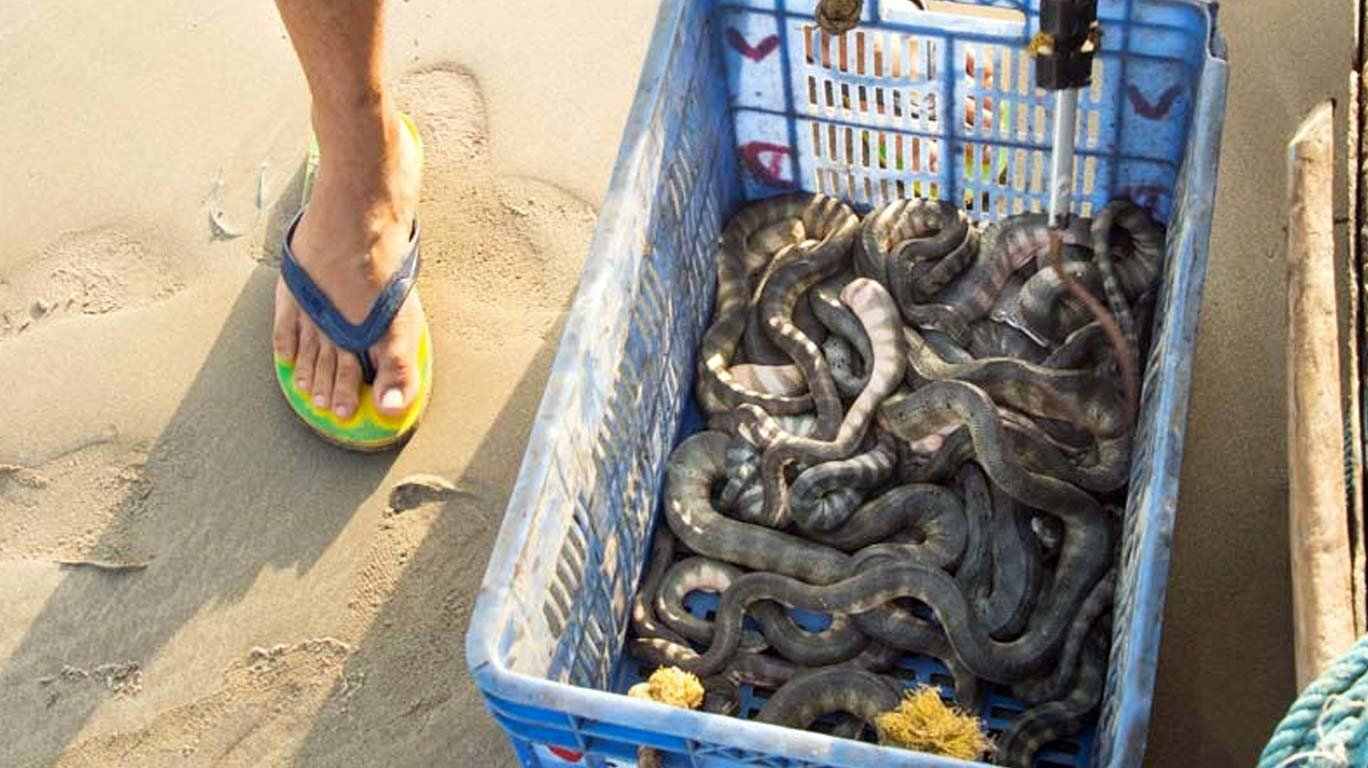 Sea, Snakes and our shore