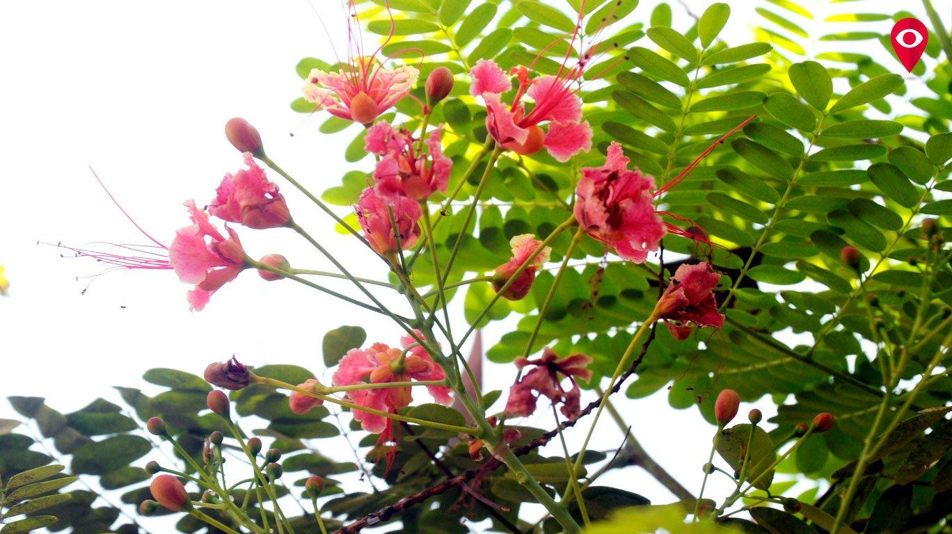 रंगीबेरंगी फुलांच्या विश्वात
