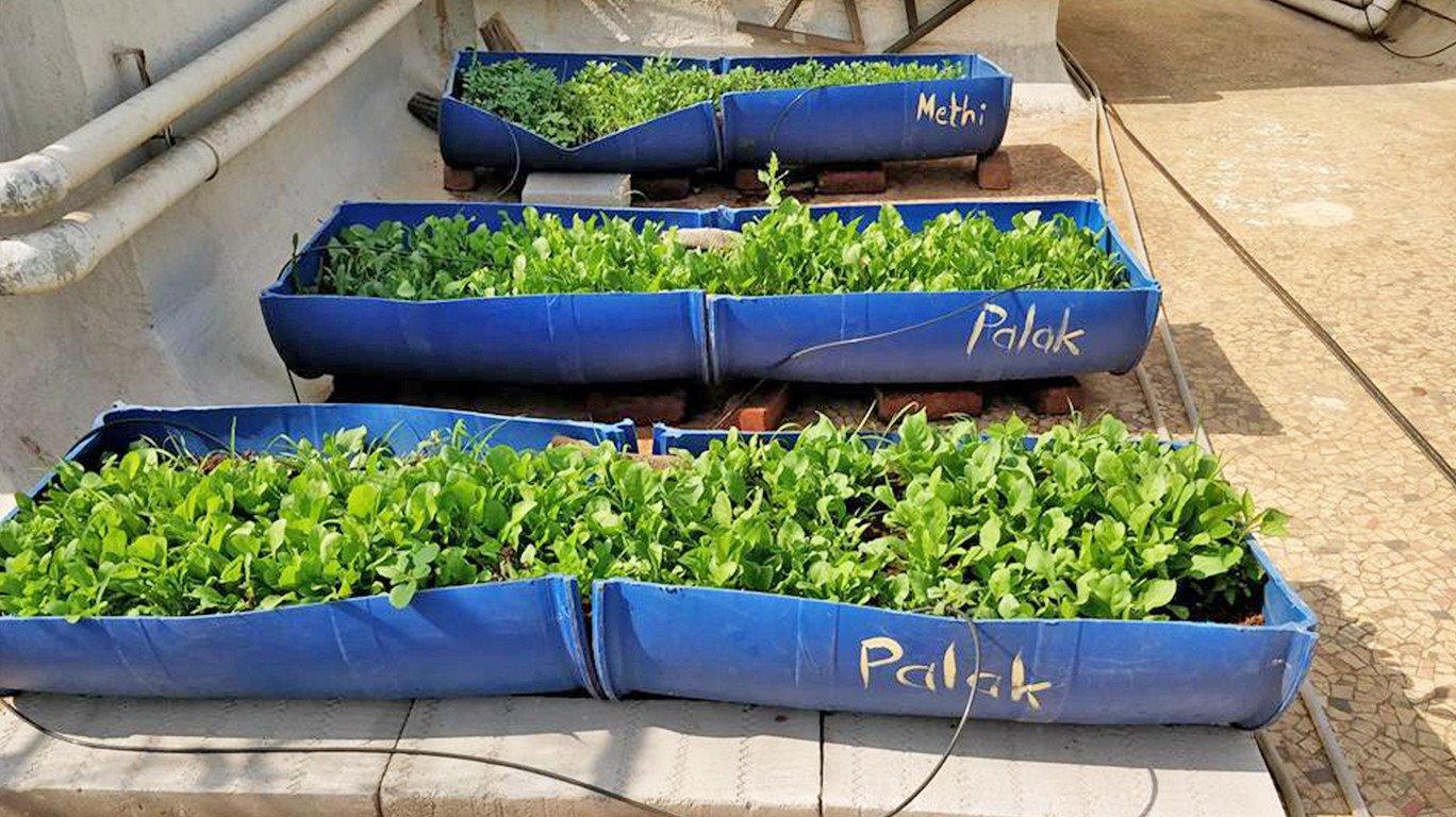 कचरे का बेहतरीन उपयोग-सोसायटी बनीं हरी-भरी और रंग-बिरंगी