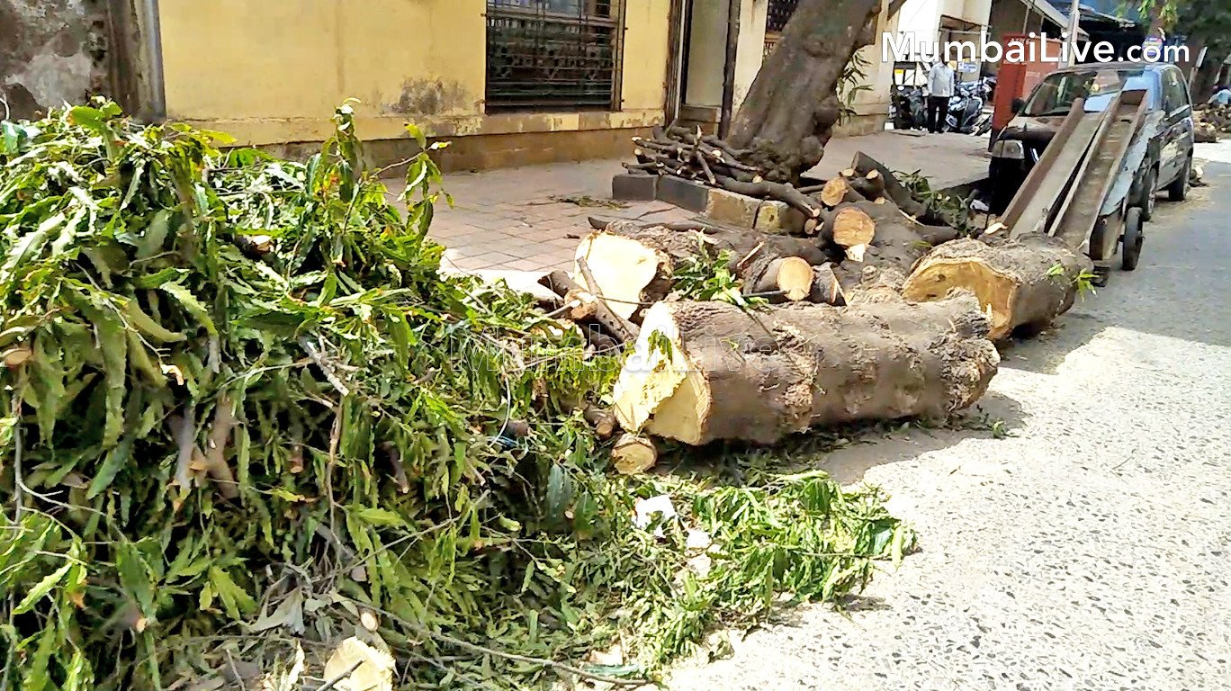 Environmentalists force authorities to terminate tree-cutting at Dadar