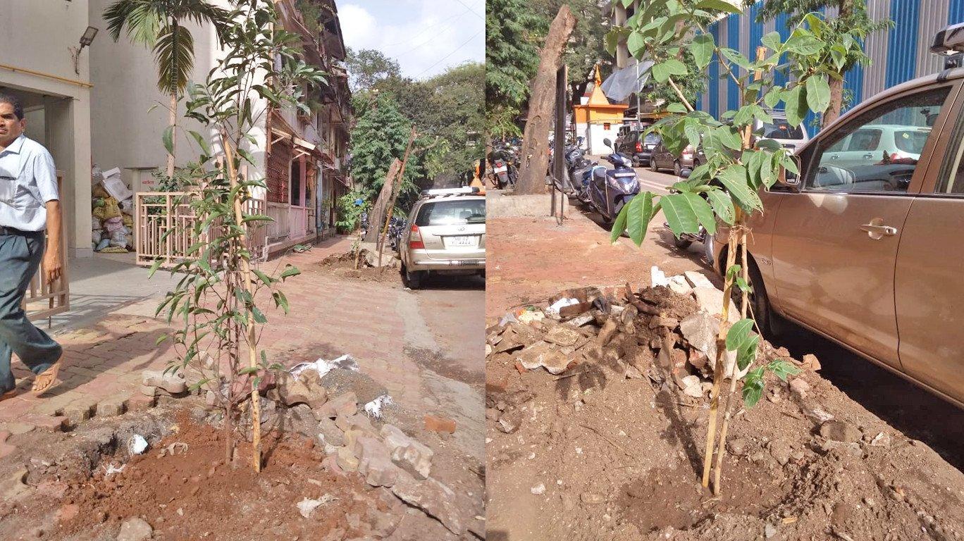 पर्यावरणविदों ने दादर में बीएमसी अधिकारियों को पेड़ काटने से रोकने पर किया मजबूर!