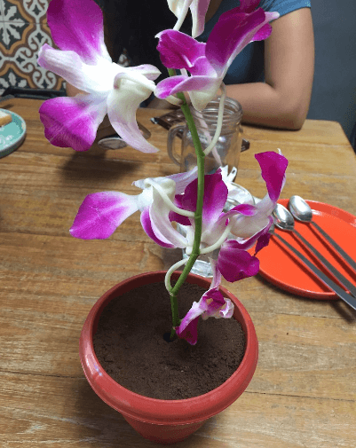 Mumbai Live & Dig in a Flower Pot Surprise dessert at this charming eatery ...