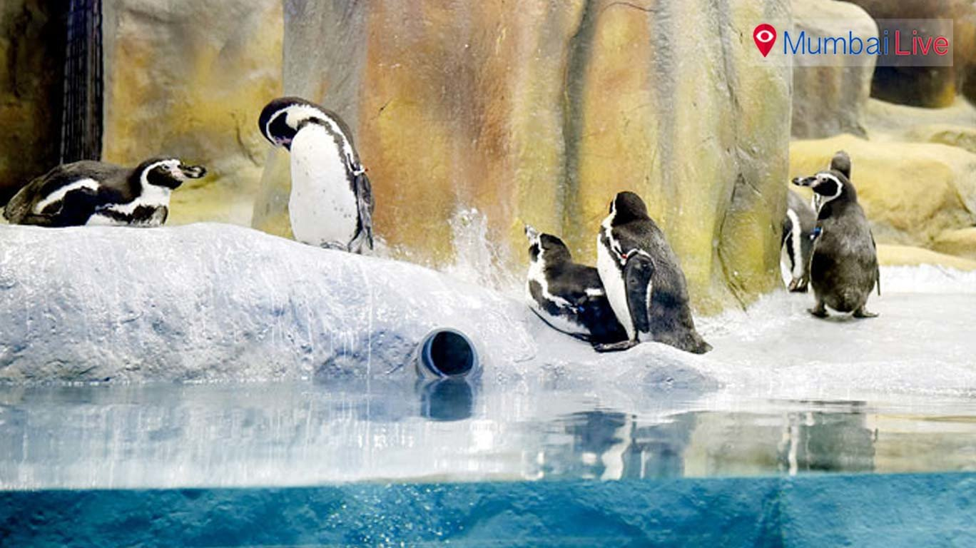 More penguins at the Byculla zoo soon?