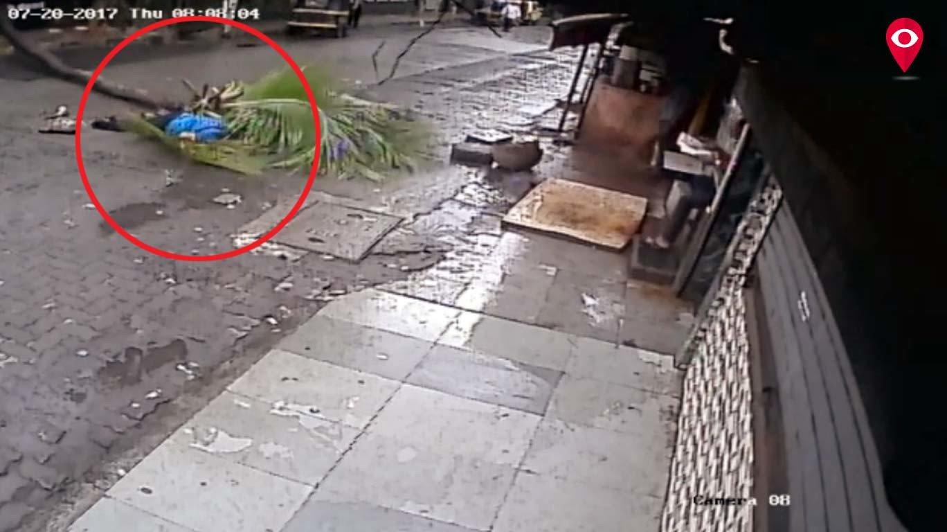 व्हायरल व्हिडिओ - झाड पडून महिलेचा मृत्यू