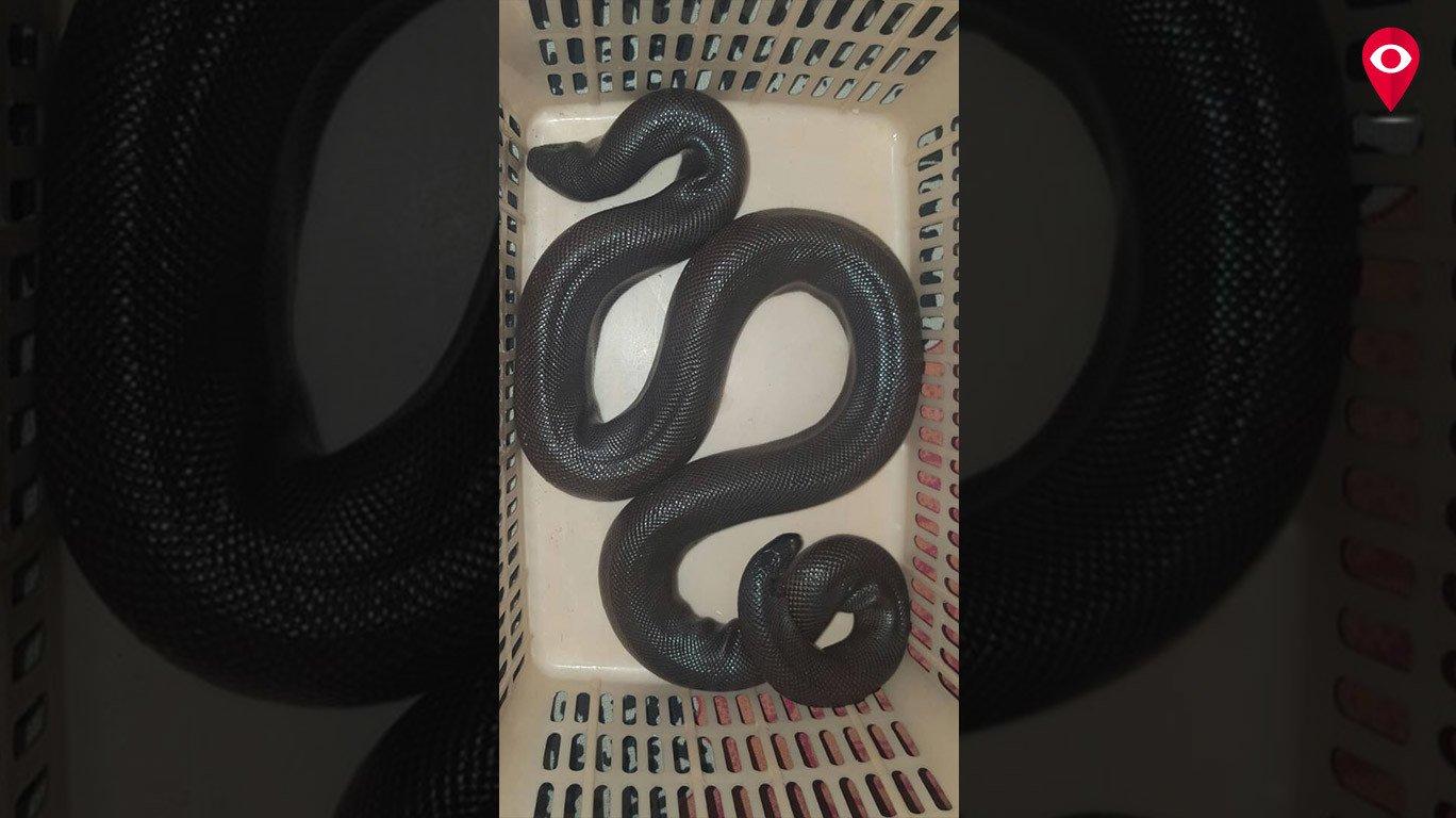 शाळकरी मुलीच्या सतर्कतेमुळे वाचले सापाचे प्राण