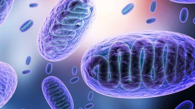 ठाण्यात आढळला म्युकोरमायकोसिसचा पहिला रुग्ण