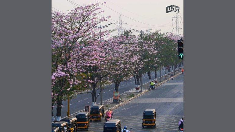 Mumbai: Biodiversity Panel Asks City's Developers to Submit EIA Report