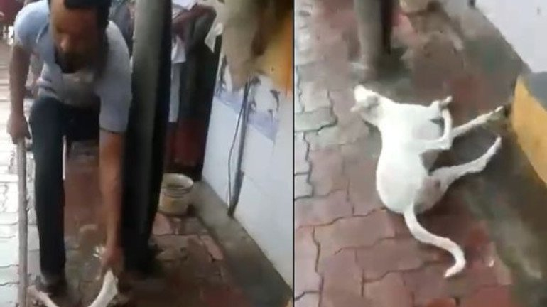 Mumbai Police arrests 31-Year-Old Man for killing a stray dog in Goregaon