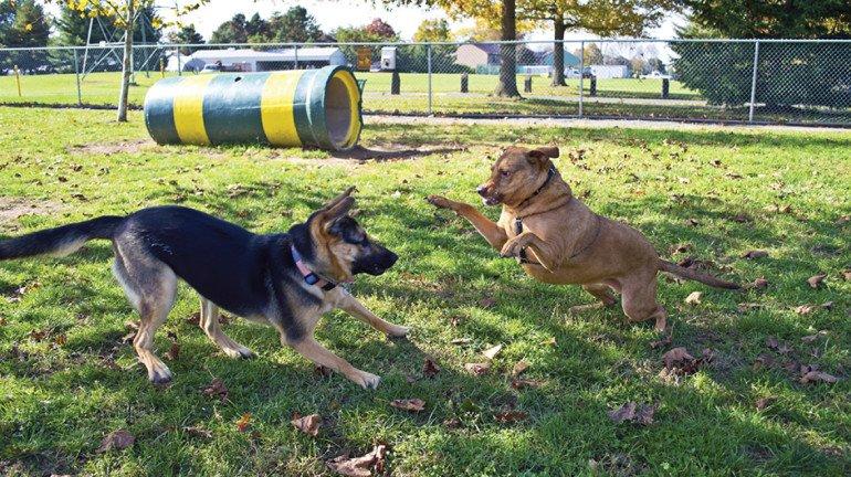 वाशी में कुत्तों के लिए पार्क
