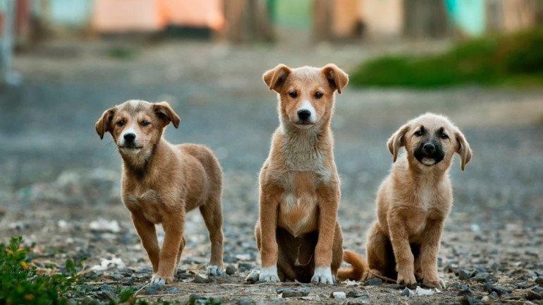 International Dog Day : 5 Best Animal Shelters In Mumbai