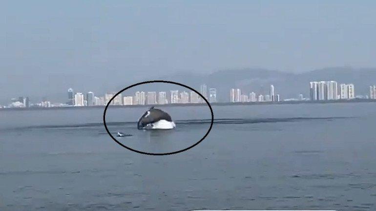 Trending Viral Video: Dolphins spotted swimming in Vashi Creek near Mumbai