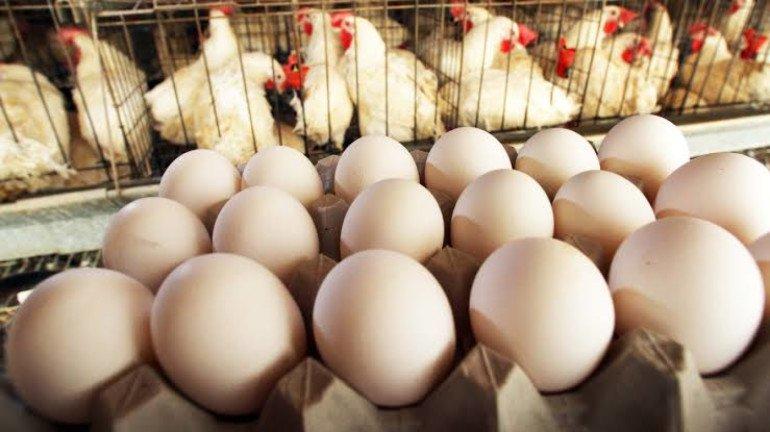 श्रावण संपताच चिकन, अंडी महागली