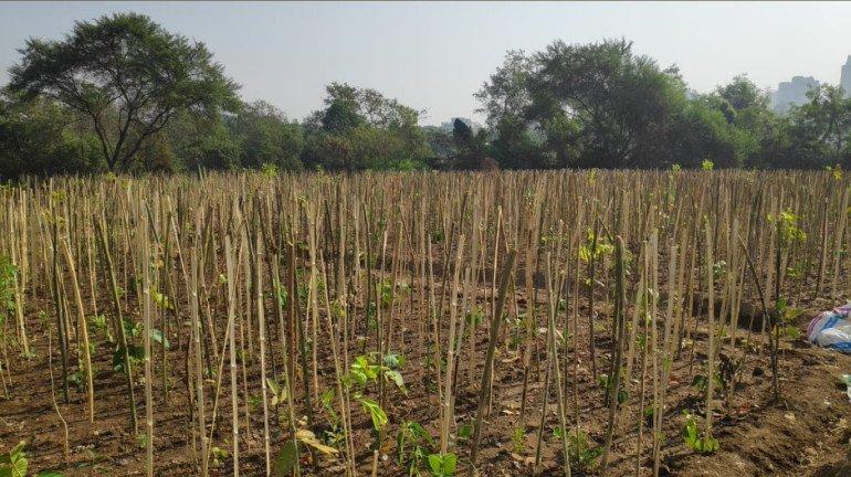 Maharashtra Bandh On October 11, Know What Transpired At Lakhimpur Kheri