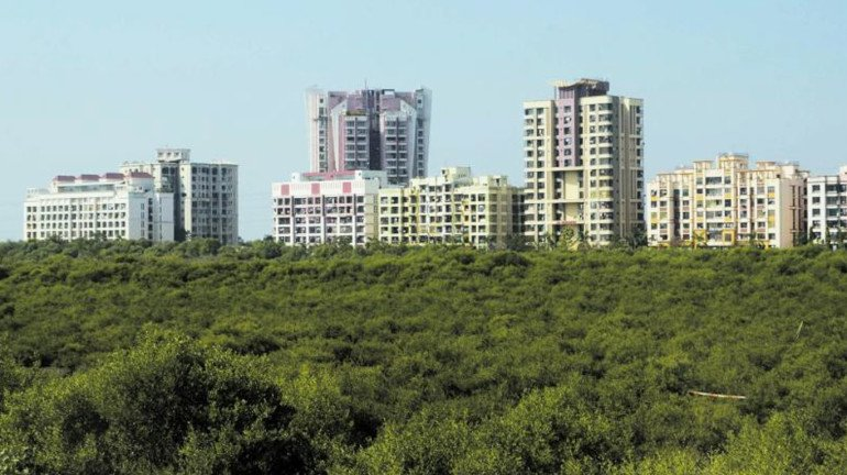 Navi Mumbai: 200 kg trash removed every week in mangrove forest clean-up