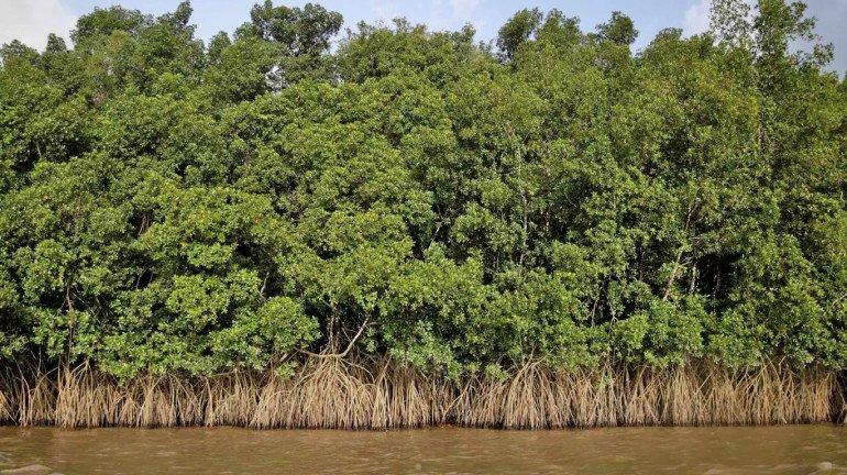 १४५० हेक्टर कांदळवन क्षेत्र वन विभागाकडे हस्तांतरित