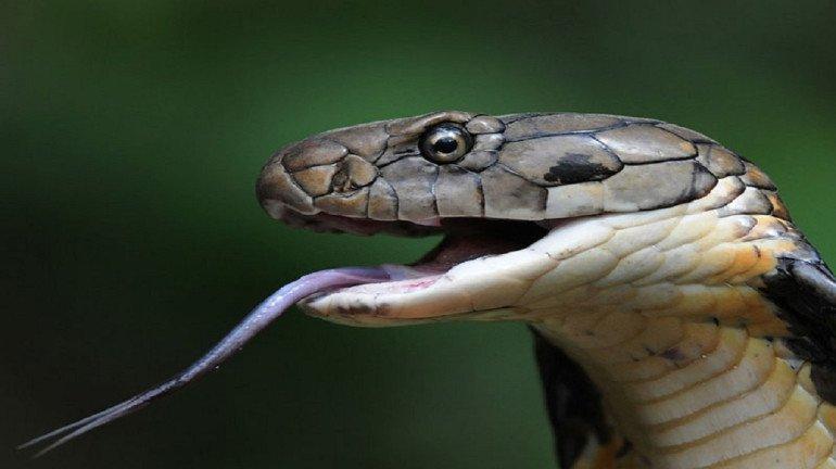 Mumbai: Used condom put over snake leaves reptile disoriented