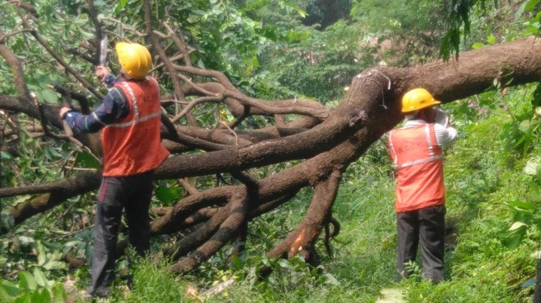 Is BMC not taking climate change seriously? Tree Authority approves cutting of 2,702 trees at Aarey Colony