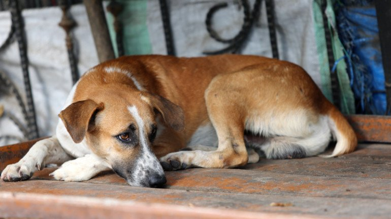 Is Mumbai not a safe city for dogs?