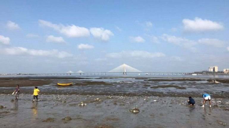 Palghar beach threatened by tarballs; Fishermen state their woes