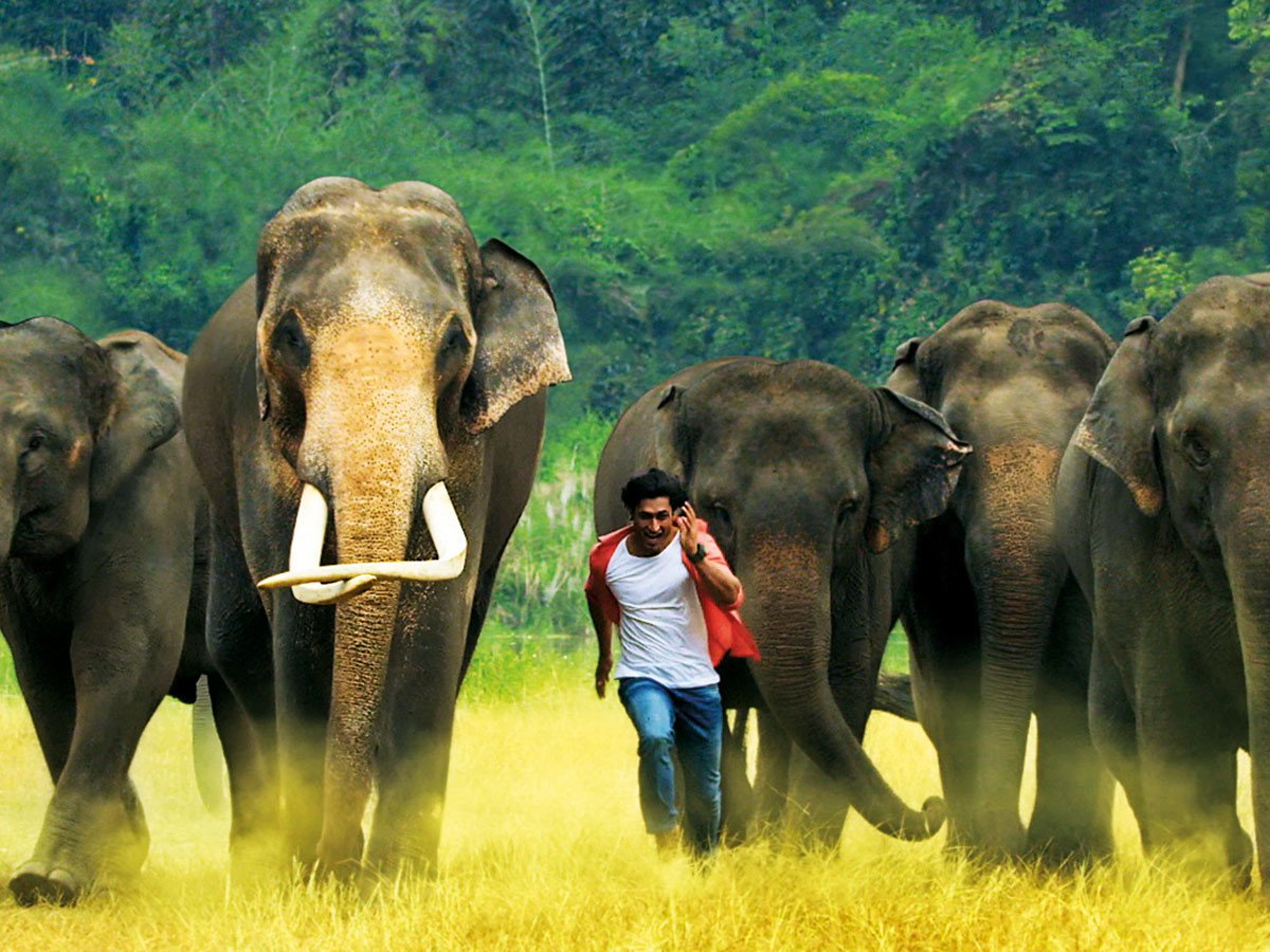 Junglee Review: Vidyut Jammwal's film has an important message for everyone