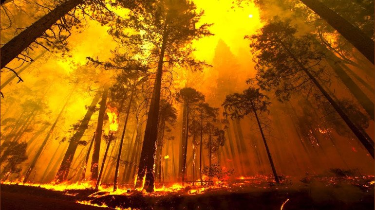 Wildfires burnt 6,533 hectares of forest: RTI