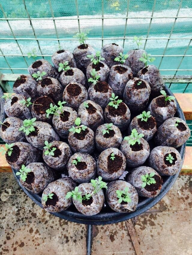 फवारणी न केलेल्या भाज्या खायच्यात? मग मातीविना टेरेसवर फुलवा शेत मळा