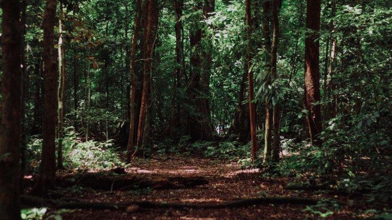 82,000 Mumbaikars Oppose Tree-Cutting at Aarey Forest