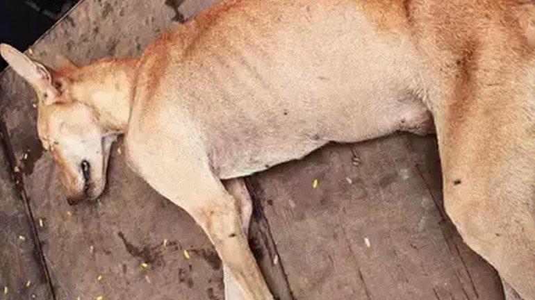 मार-मार कर कुत्ते को कर दिया घायल, दो गिरफ्तार