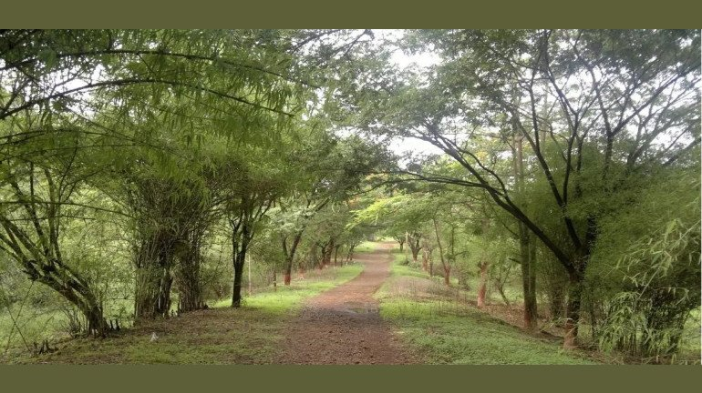Citizens To Protest With A Human Chain At Aarey Forest To Oppose The Cutting Of Trees