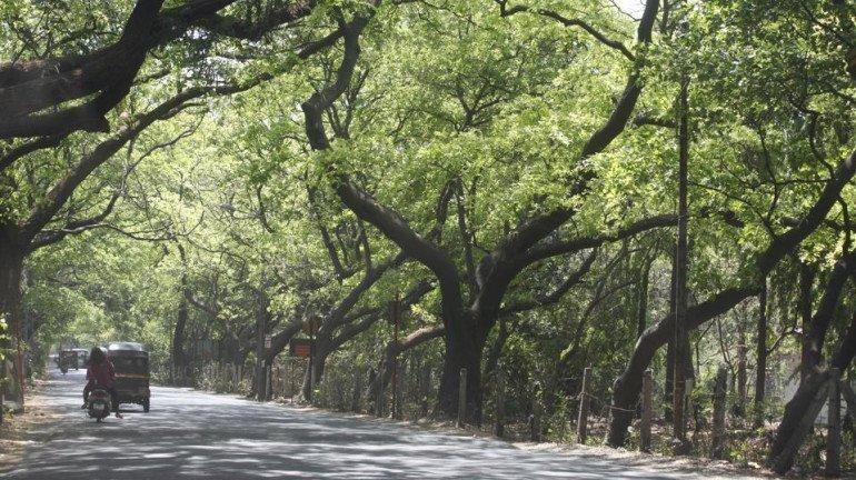 Aarey Forest: Congress files affidavit in Bombay HC opposing BMC Tree Authority's decision
