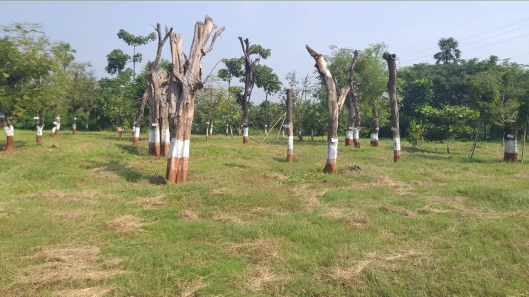 Four member committee to review Aarey Carshed issue