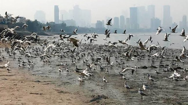 Thanks to the Mahim Beach cleanup drive, migratory birds are making a comeback