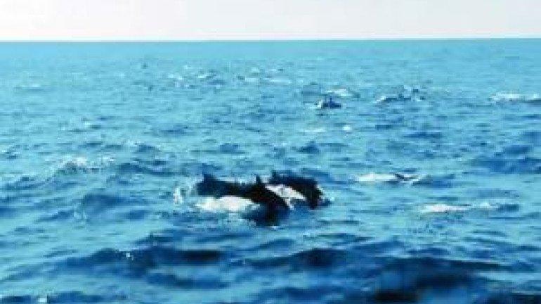 Dolphins Spotted Near Raj Bhavan