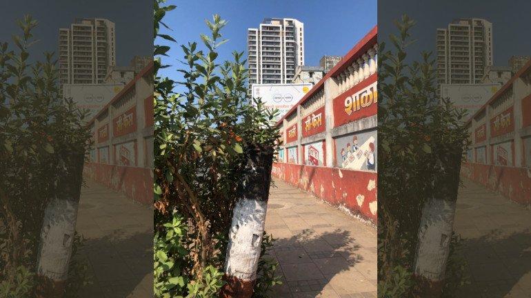 आदित्य ठाकरेंच्या मतदारसंघातच झाडांची कत्तल, मनसेची पालिका आयुक्तांकडे तक्रार