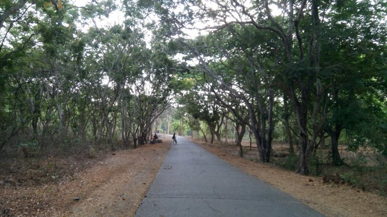 SGNP to open gates for walkers and cyclists from June 15