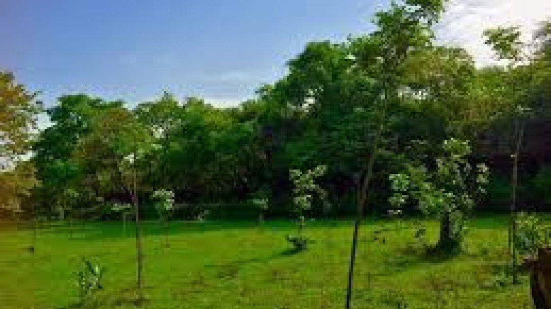Bombay HC Permits Felling Of 357 Mangrove Trees For Metro Line-4