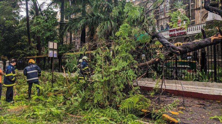 मुंबई: विकास परियोजनाओं के लिए 1,300 से अधिक पेड़ काटे जा सकते हैं