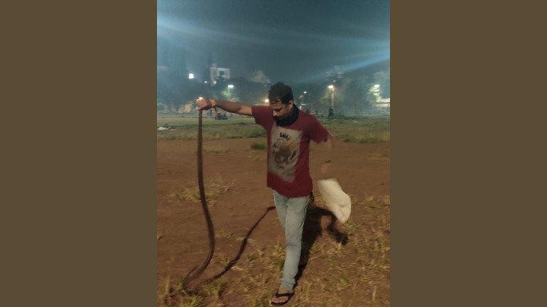 Six snakes spotted in 10 Days at Dadar's Shivaji Park