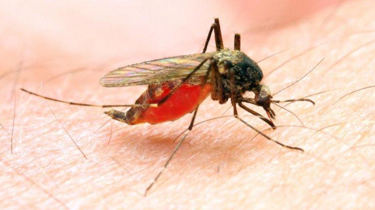 कोरोना के साथ ही मलेरिया, गैस्ट्रो व लेप्टो के मरीजों में भी बढ़ोतरी